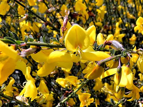 Imagem de pétalas amarelas