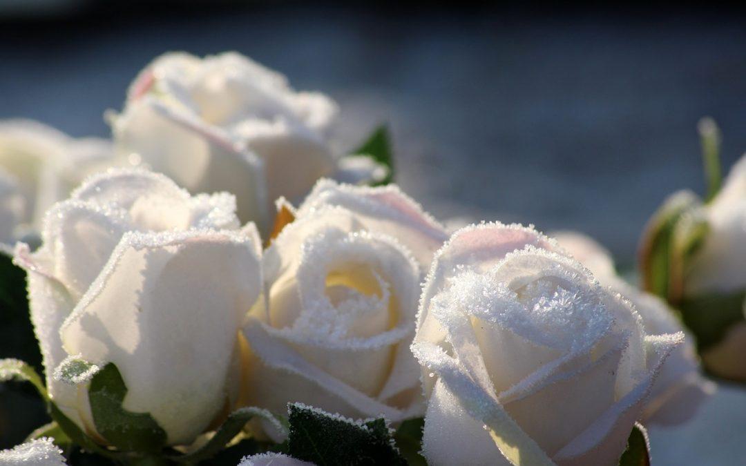 O Salmo, as 3 Rosas Brancas e Dinheiro Sempre